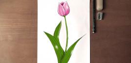 Si të vizatojmë një tulipanë