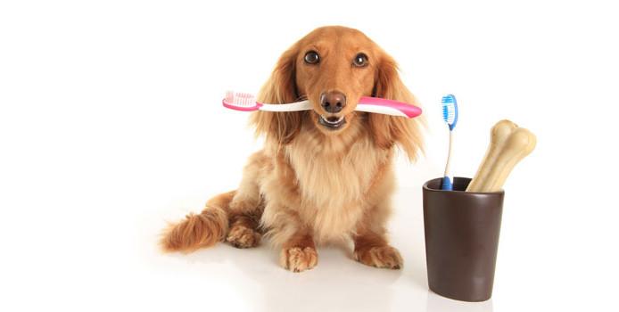 Si të lajmë dhëmbët e qenit