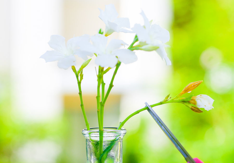 900px-Keep-Flowers-Fresh-Step-11-Version-2