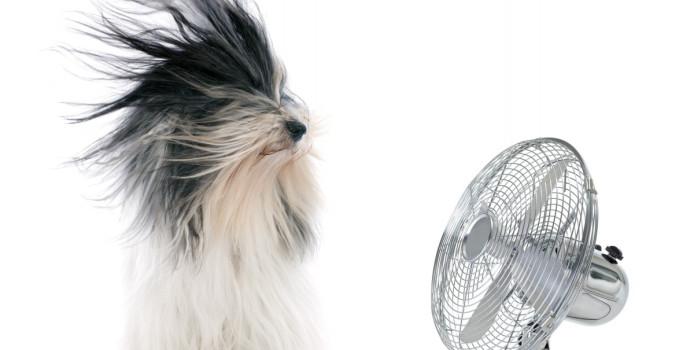 Si të bëjmë freskuesen e thjeshtë të lëshojë ajër të kondicionuar